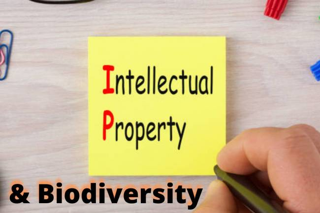 INTELLECTUAL PROPERTY AND BIODIVERSITY : ECONOMIC PERSPECTIVE