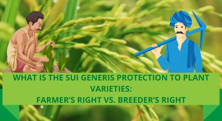 WHAT IS THE SUI GENERIS PROTECTION TO PLANT VARIETIES: FARMER'S RIGHT VS. BREEDER'S RIGHT